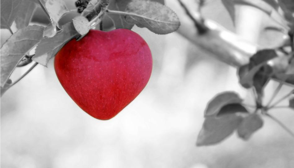 慈愛の心はどうやって育むのか?