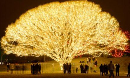 どこで、どのようにこのクリスマスの「命の木」が作られたか