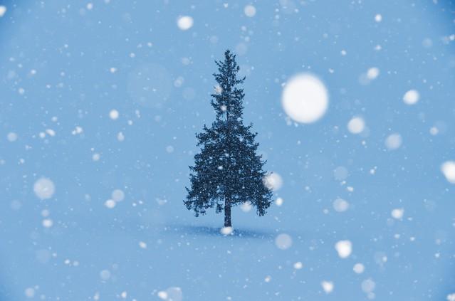 喜びを分かち合うクリスマス