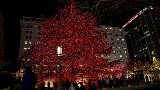 テンプルスクエアにあるレバノンから来た杉の木