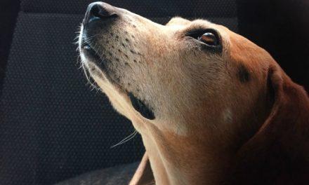 生き物と来世:犬も天国へ行くのでしょうか?