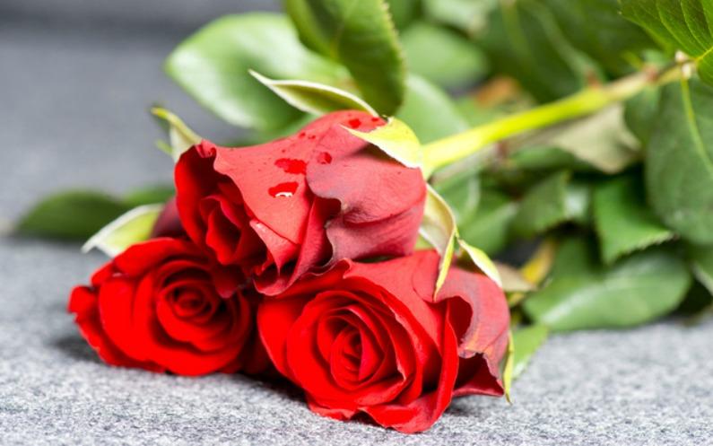 伴侶の死と向き合う方法:経験者たちからの助言