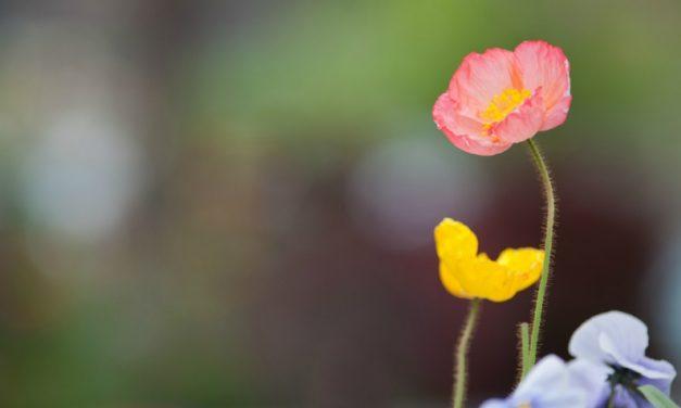 バラード長老と草むしりをした日の忘れられない教訓:一人一人との時間を大切にすること