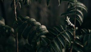 暗めの場所にある濃い緑の植物