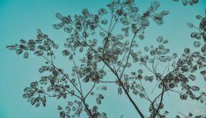 暗めの青い空に広がる木の枝