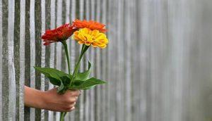 3本の花を束ねて持っている手をフェンスから差し出している